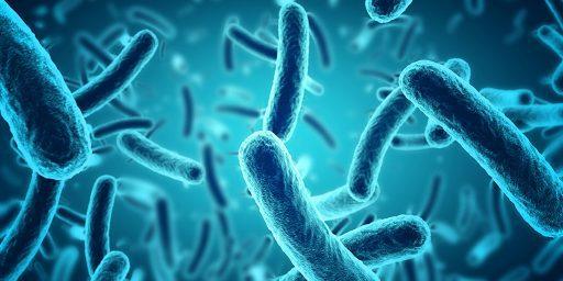 Bacterial-biofilms could help probiotics extraction