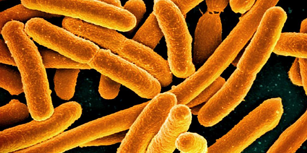 Faecal Microbiota Transplant