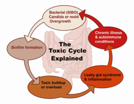 the toxic cycle explained